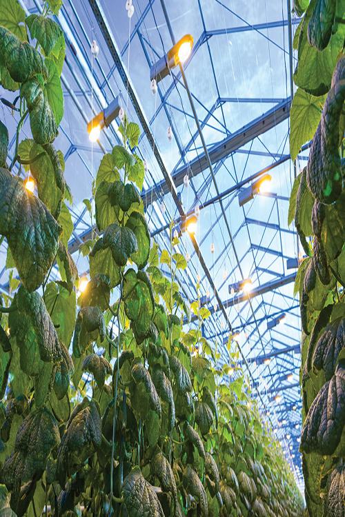 tuinbouwkasten